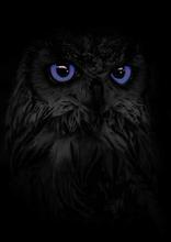 OwlMidnight