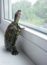 TurtleMonroe