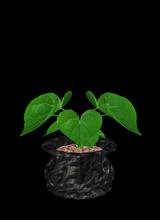 avatar resmi